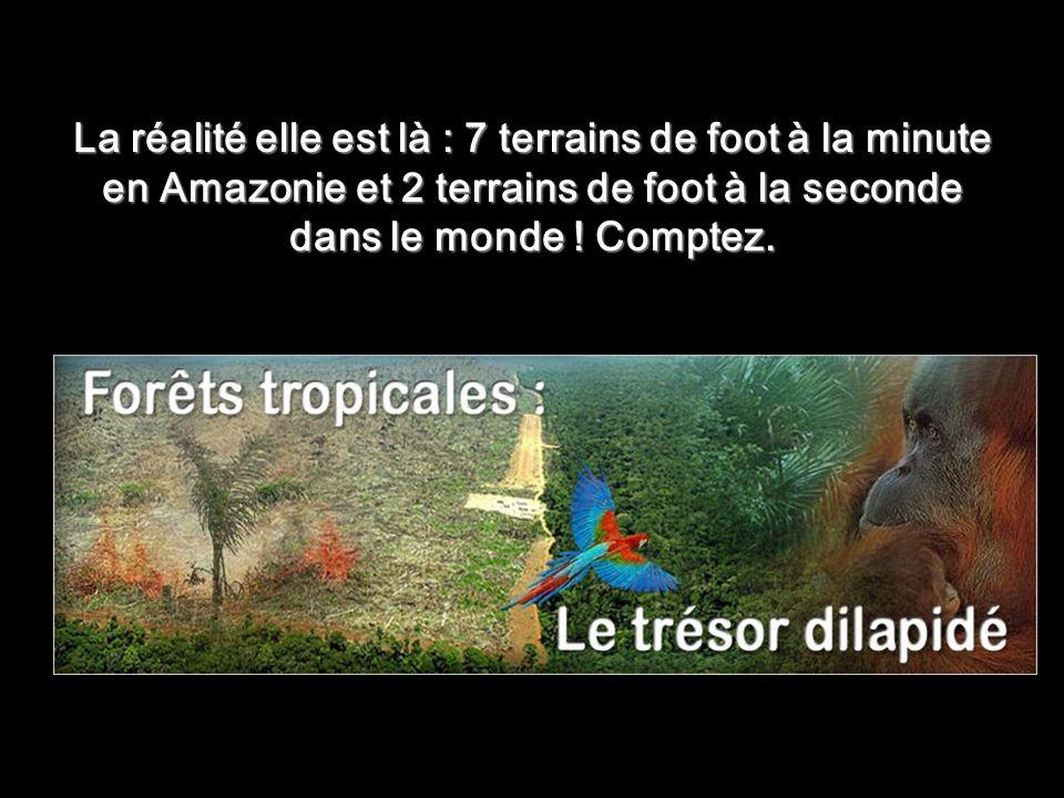 La réalité elle est là : 7 terrains de foot à la minute en Amazonie et 2 terrains de foot à la seconde dans le monde .