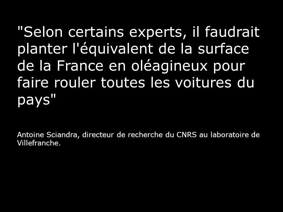 Selon certains experts, il faudrait planter l équivalent de la surface de la France en oléagineux pour faire rouler toutes les voitures du pays