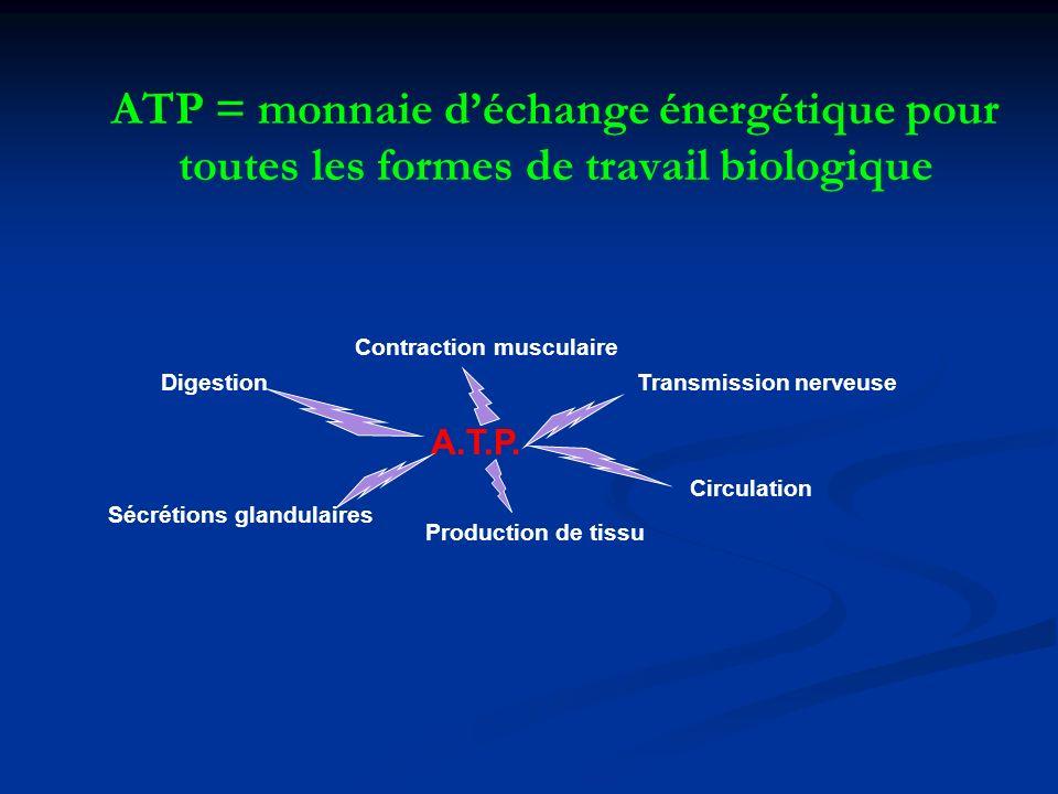 ATP = monnaie d'échange énergétique pour toutes les formes de travail biologique