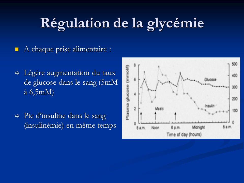 Régulation de la glycémie