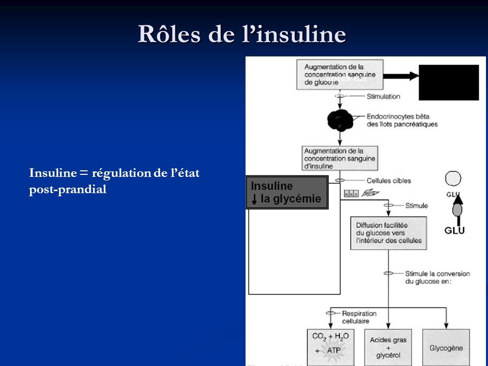 Rôles de l'insuline Insuline = régulation de l'état post-prandial