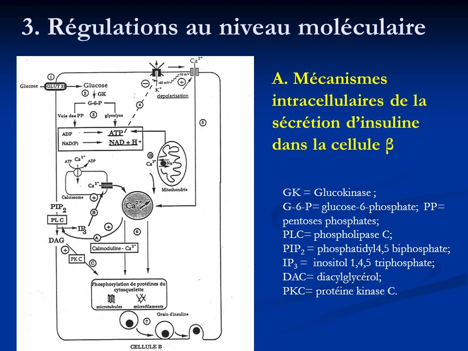 3. Régulations au niveau moléculaire