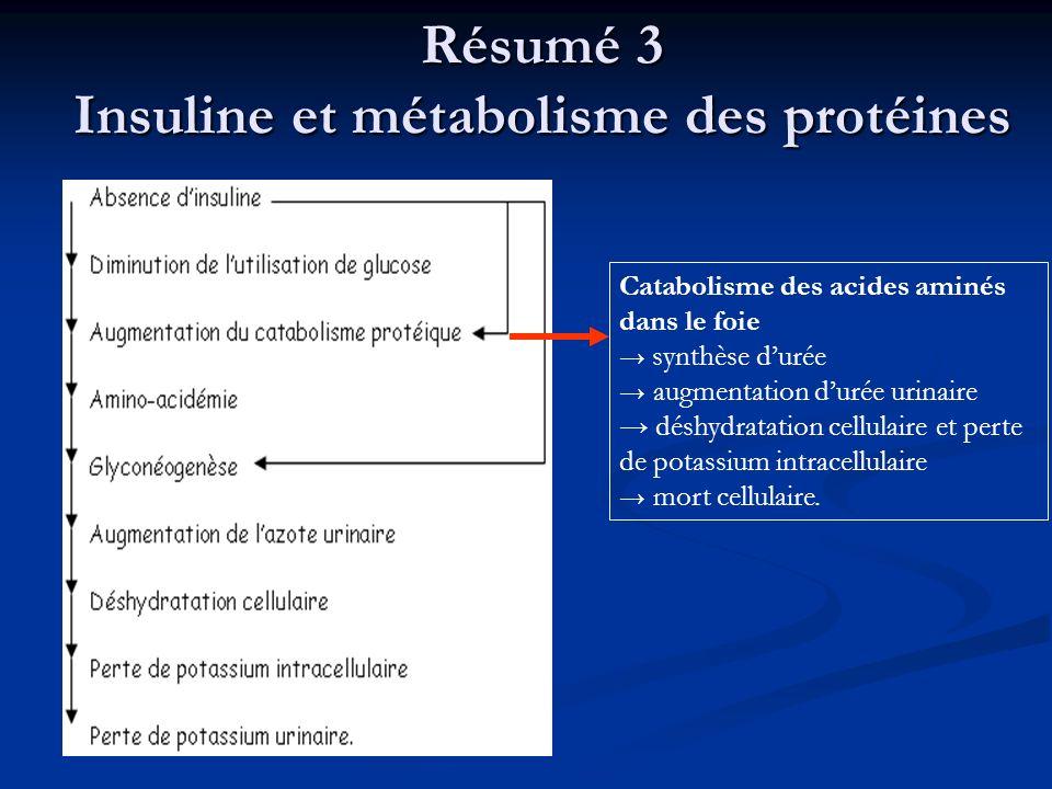 Résumé 3 Insuline et métabolisme des protéines