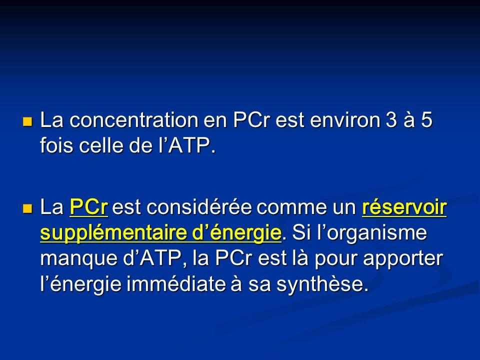 La concentration en PCr est environ 3 à 5 fois celle de l'ATP.