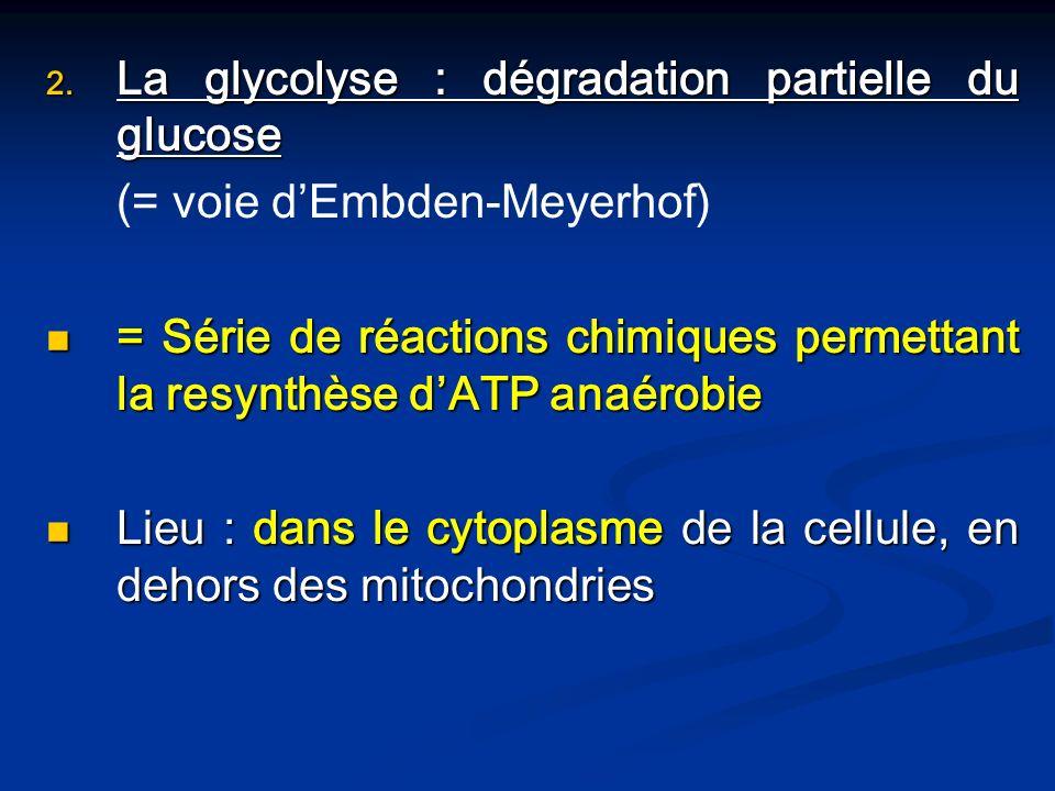 La glycolyse : dégradation partielle du glucose