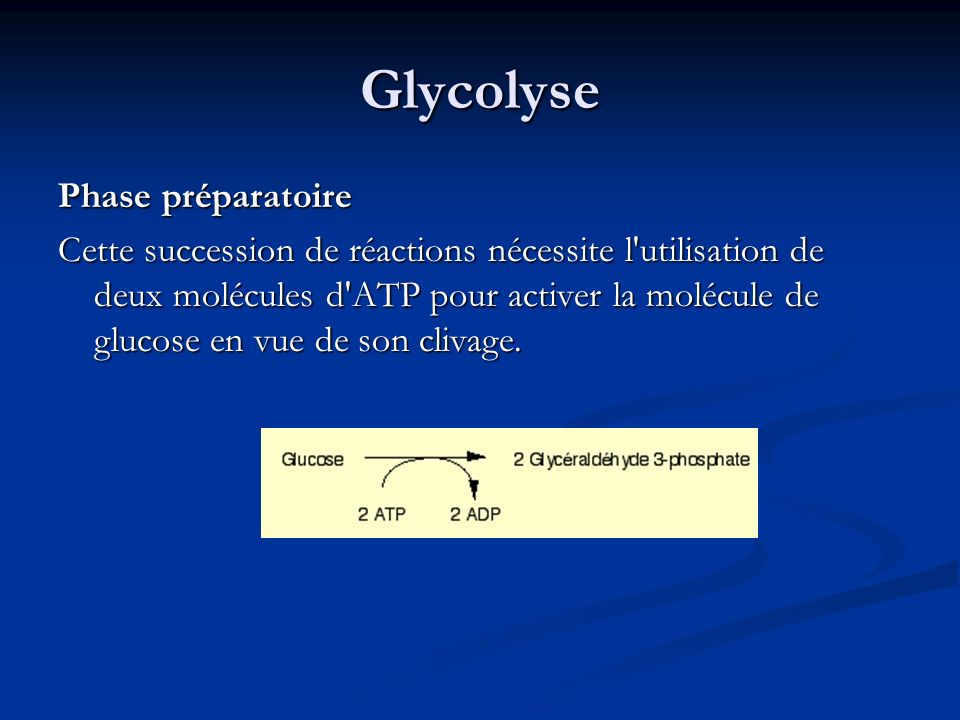 Glycolyse Phase préparatoire