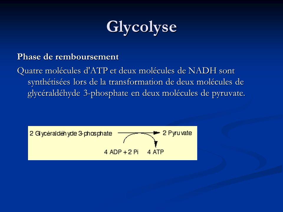 Glycolyse Phase de remboursement