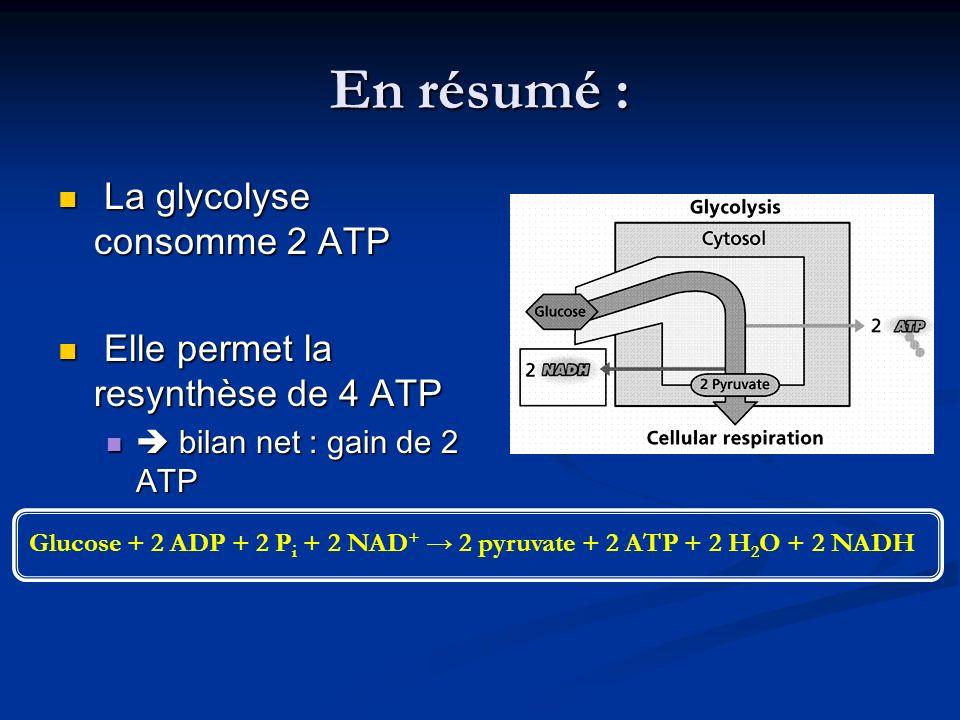 Glucose + 2 ADP + 2 Pi + 2 NAD+ → 2 pyruvate + 2 ATP + 2 H2O + 2 NADH
