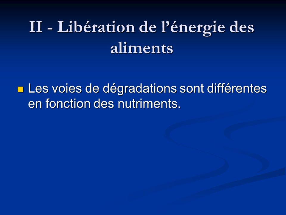 II - Libération de l'énergie des aliments