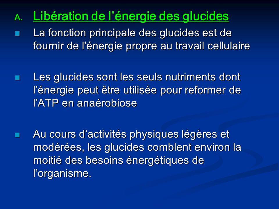 Libération de l'énergie des glucides