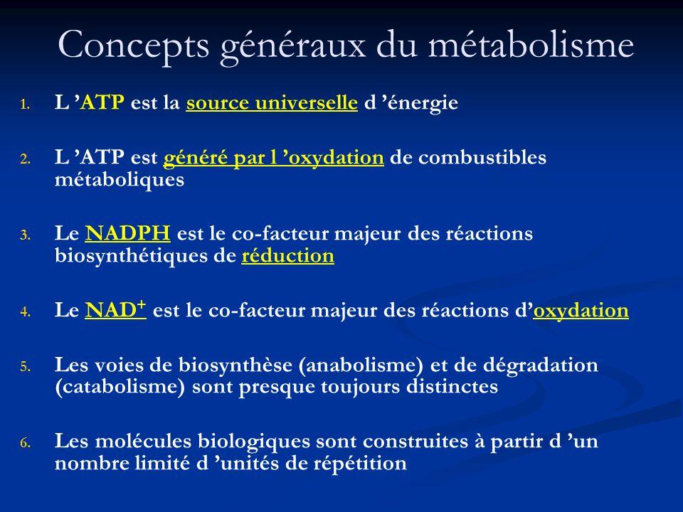 Concepts généraux du métabolisme