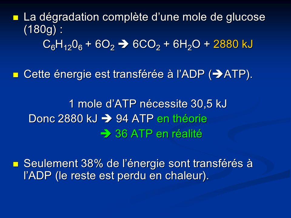 1 mole d'ATP nécessite 30,5 kJ