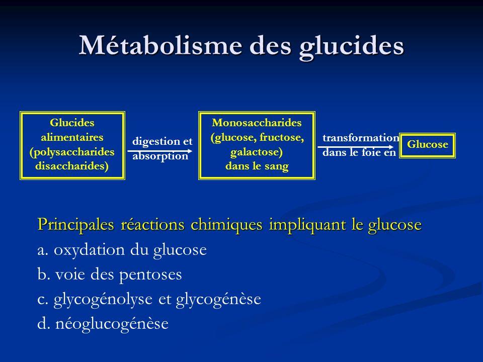 Métabolisme des glucides