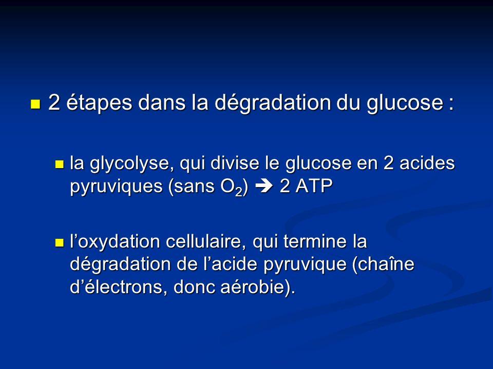 2 étapes dans la dégradation du glucose :
