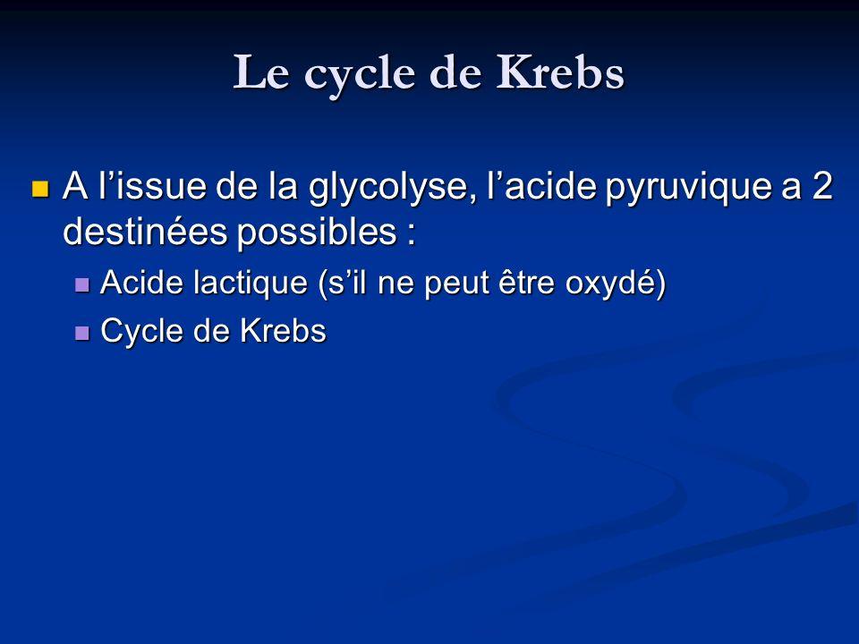 Le cycle de Krebs A l'issue de la glycolyse, l'acide pyruvique a 2 destinées possibles : Acide lactique (s'il ne peut être oxydé)