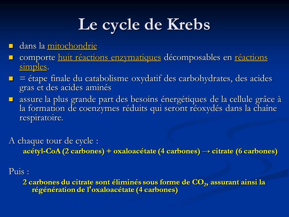 Le cycle de Krebs dans la mitochondrie