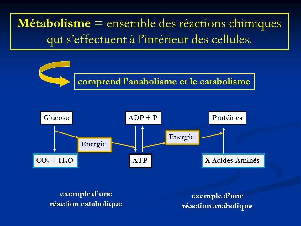 Métabolisme = ensemble des réactions chimiques qui s'effectuent à l'intérieur des cellules.