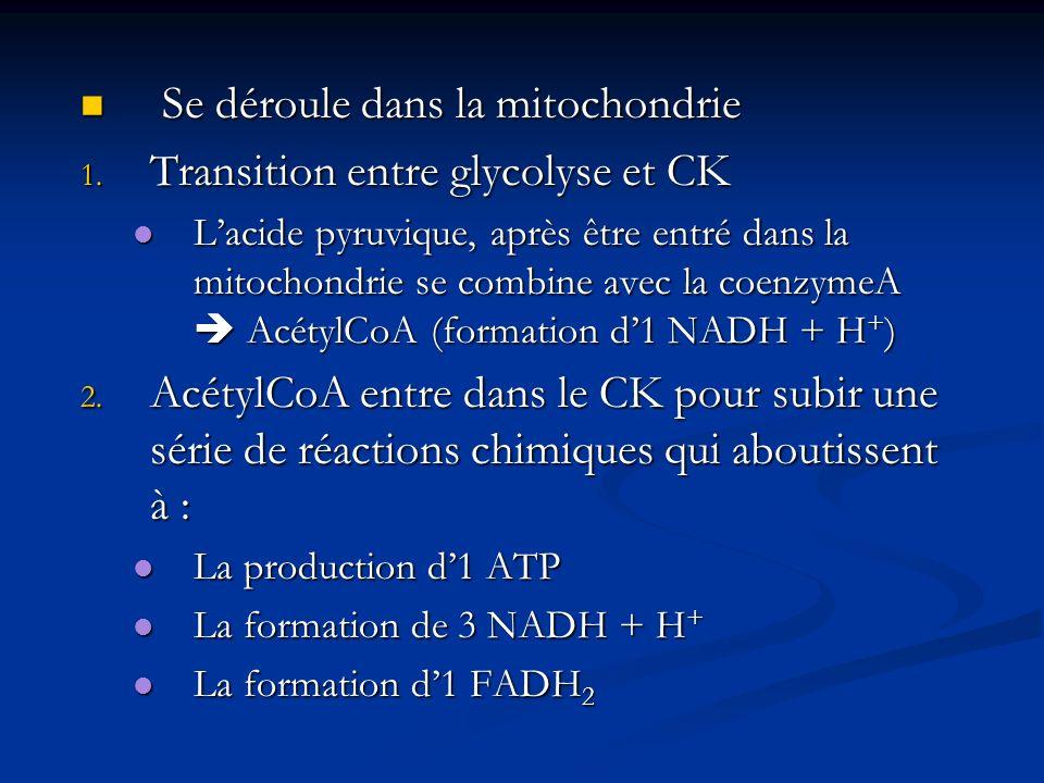 Se déroule dans la mitochondrie Transition entre glycolyse et CK