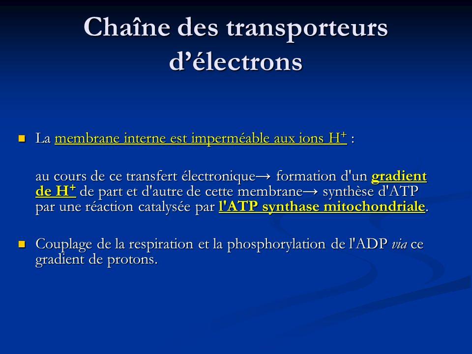 Chaîne des transporteurs d'électrons