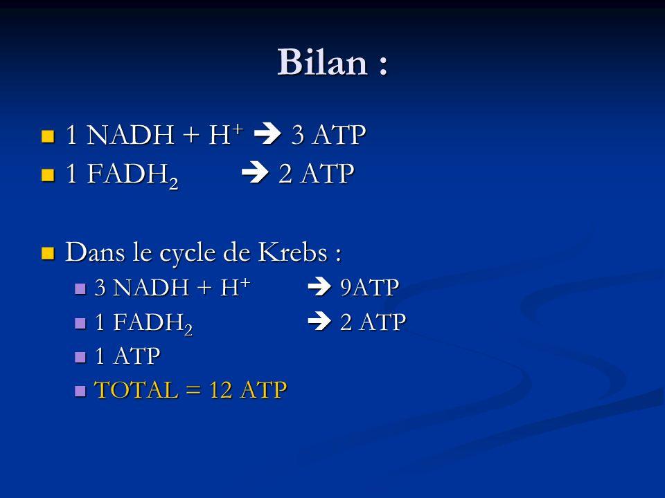 Bilan : 1 NADH + H+  3 ATP 1 FADH2  2 ATP Dans le cycle de Krebs :