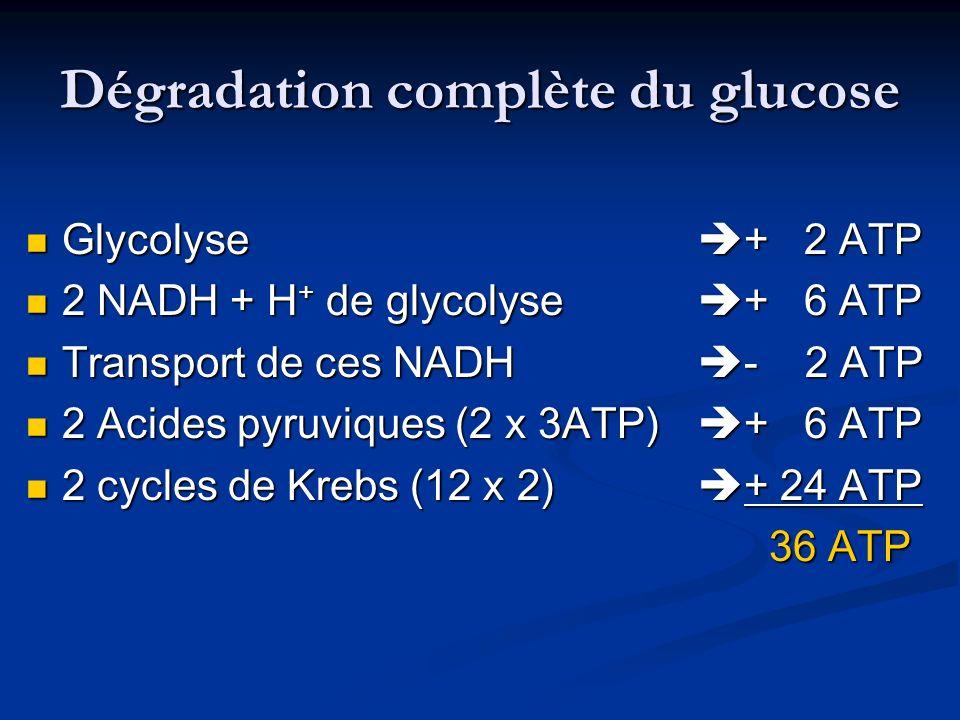 Dégradation complète du glucose