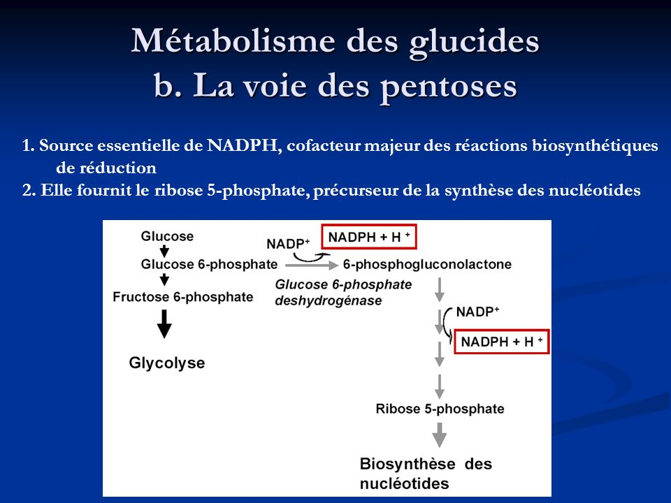 Métabolisme des glucides b. La voie des pentoses
