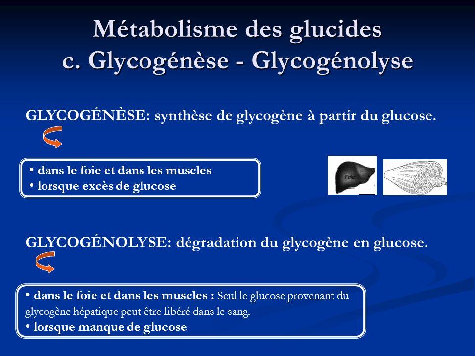Métabolisme des glucides c. Glycogénèse - Glycogénolyse