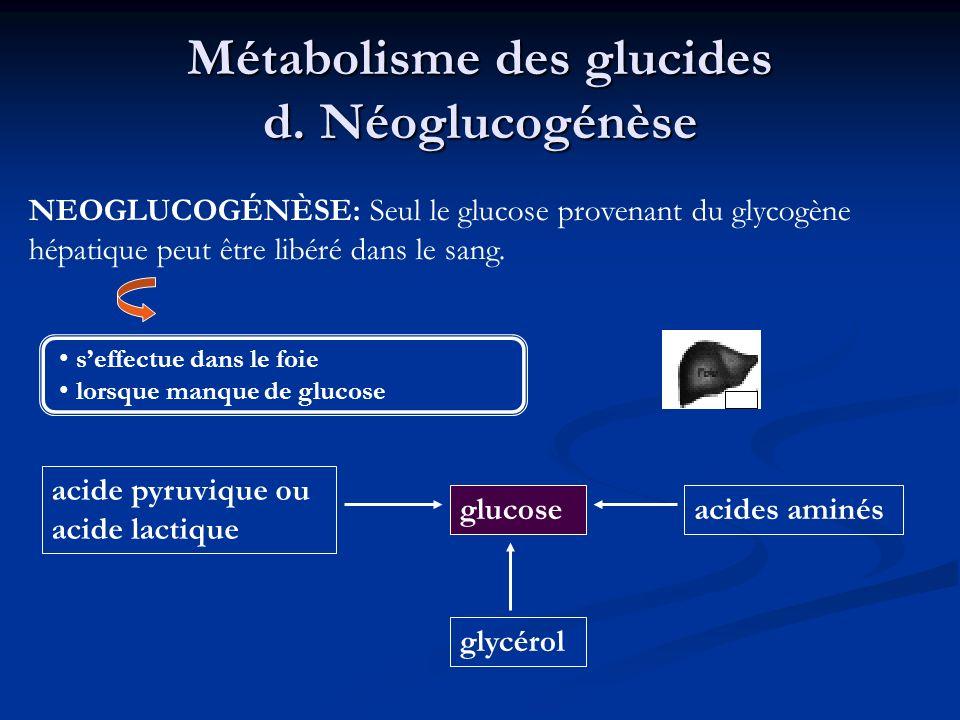 Métabolisme des glucides d. Néoglucogénèse