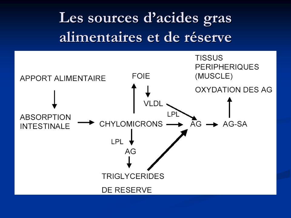 Les sources d'acides gras alimentaires et de réserve