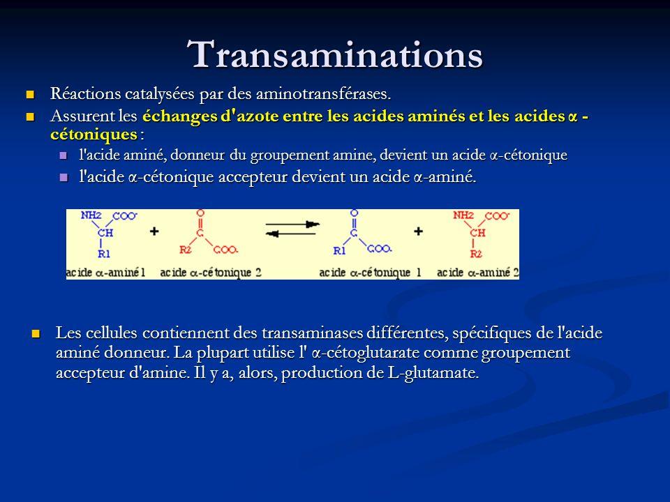 Transaminations Réactions catalysées par des aminotransférases.