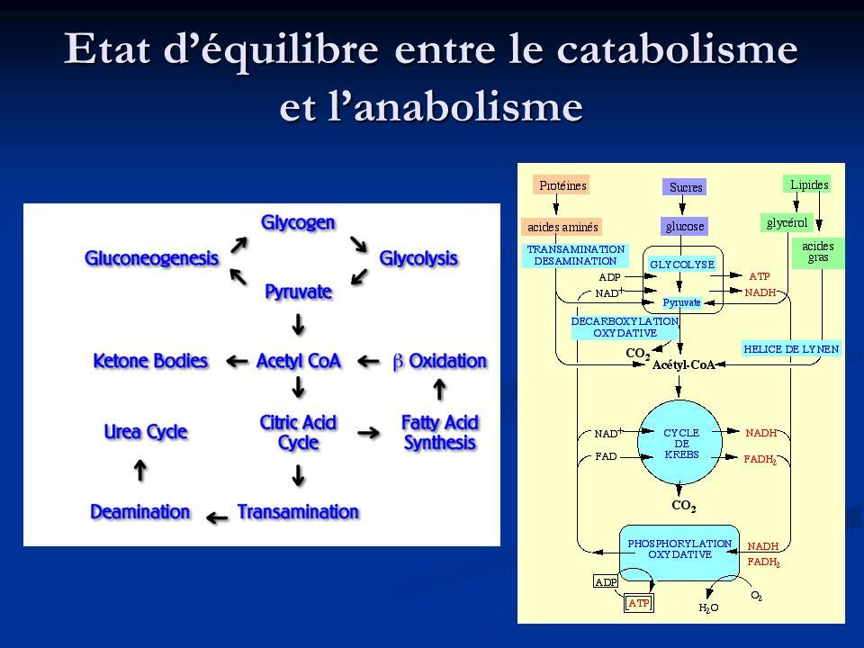 Etat d'équilibre entre le catabolisme et l'anabolisme