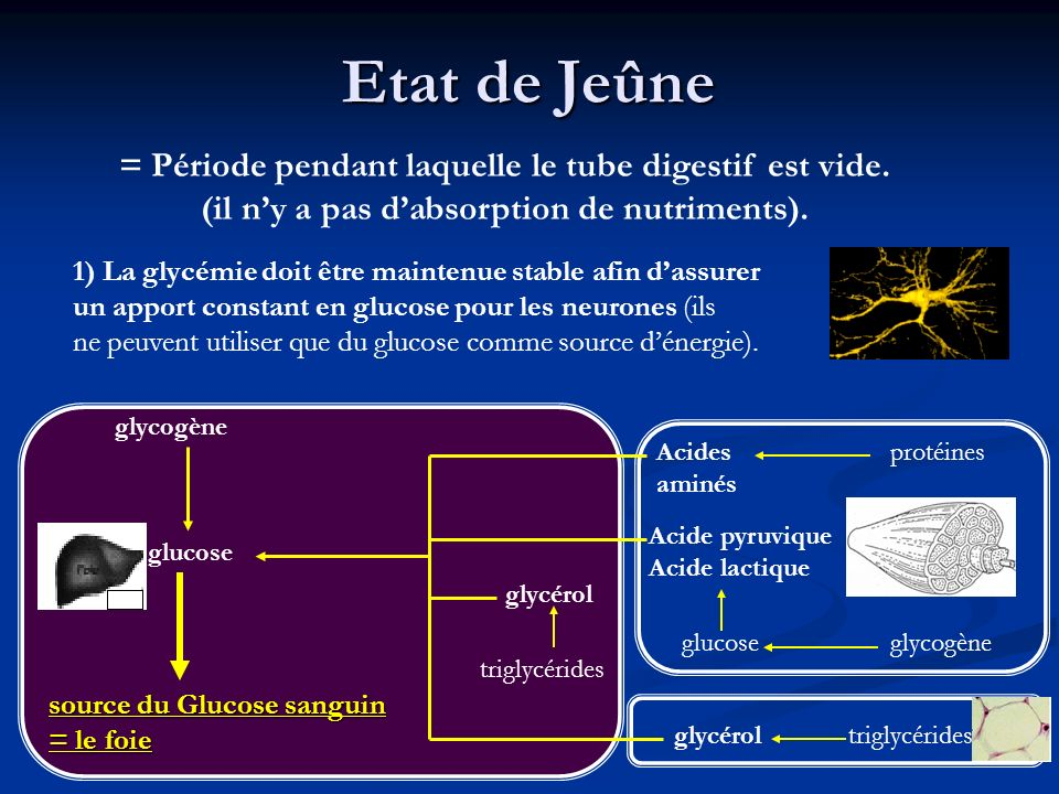Etat de Jeûne = Période pendant laquelle le tube digestif est vide.