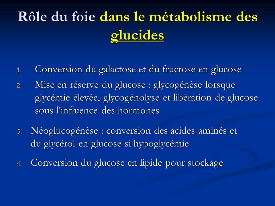 Rôle du foie dans le métabolisme des glucides