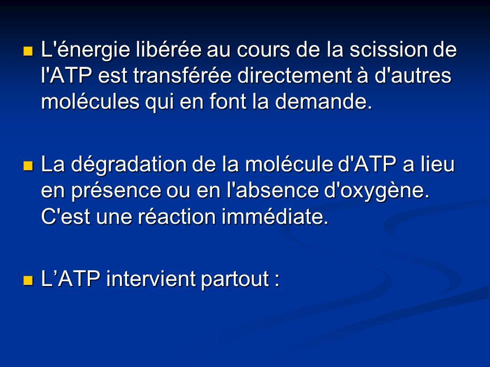 L énergie libérée au cours de la scission de l ATP est transférée directement à d autres molécules qui en font la demande.