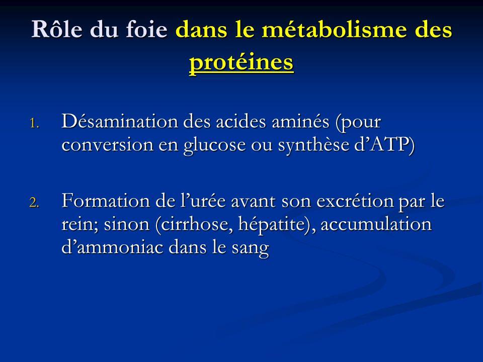 Rôle du foie dans le métabolisme des protéines