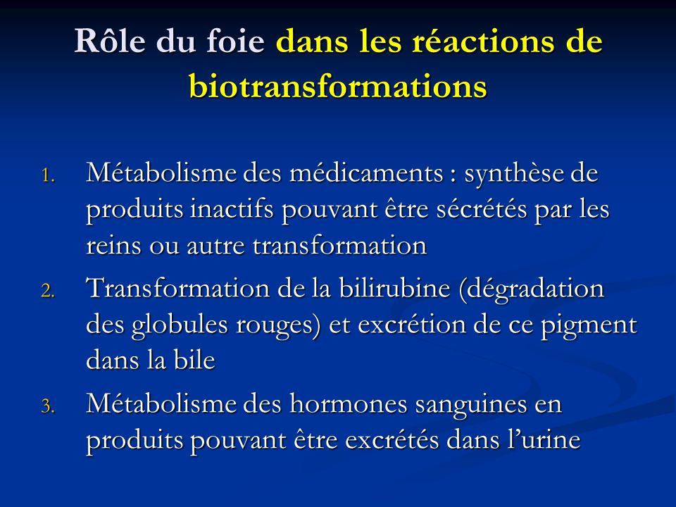 Rôle du foie dans les réactions de biotransformations