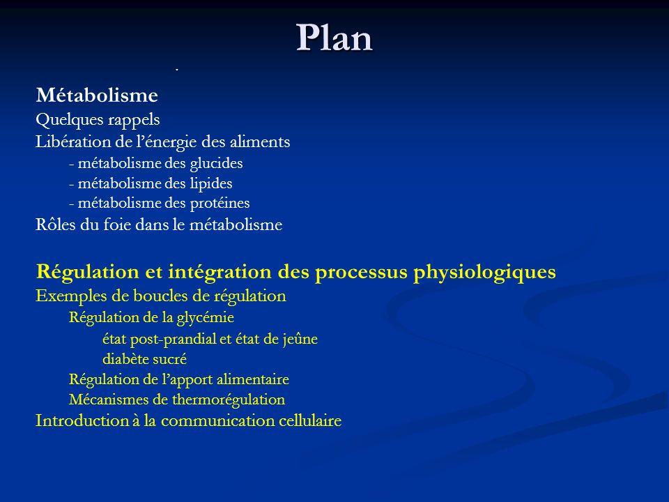 Plan · Métabolisme. Quelques rappels. Libération de l'énergie des aliments. - métabolisme des glucides.