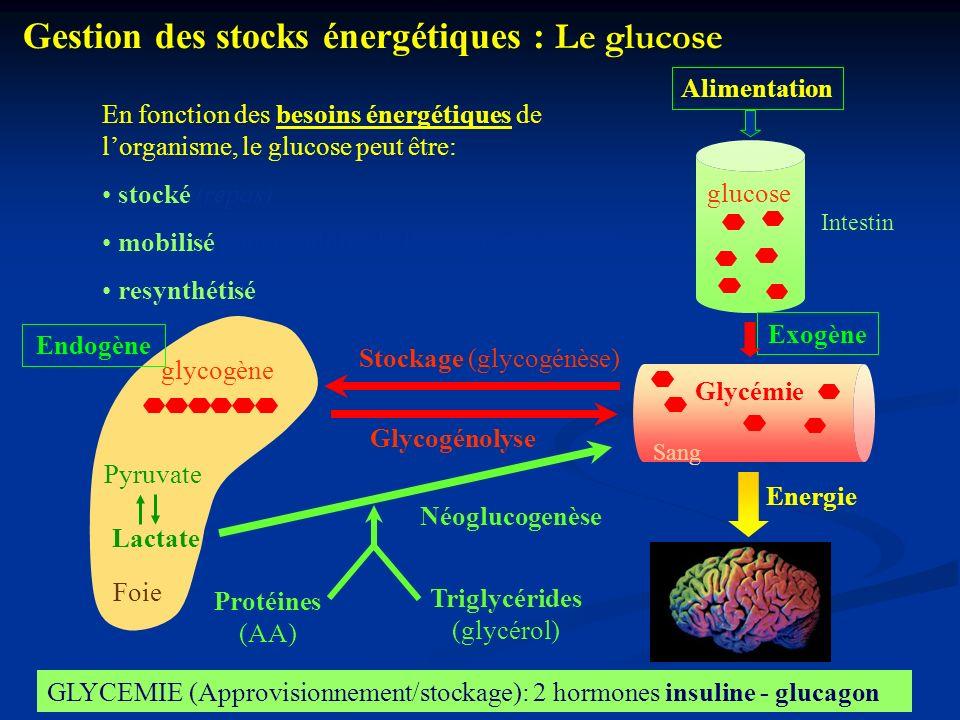Triglycérides (glycérol)