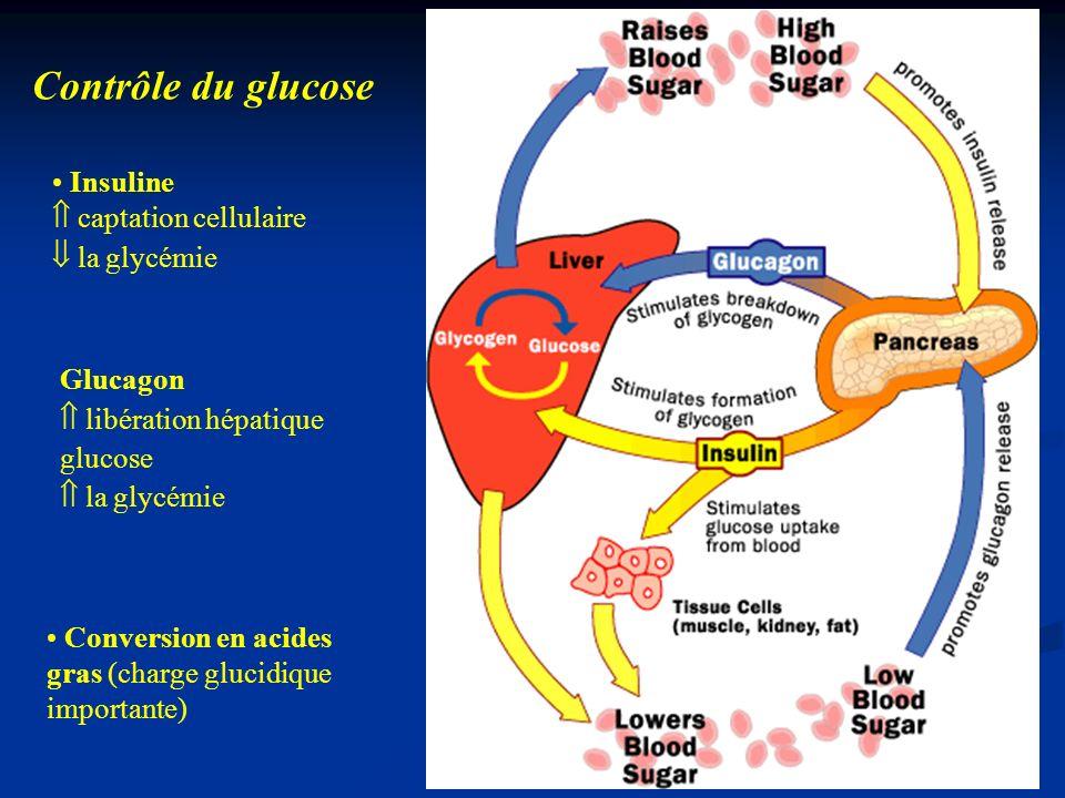 Contrôle du glucose Insuline  captation cellulaire  la glycémie