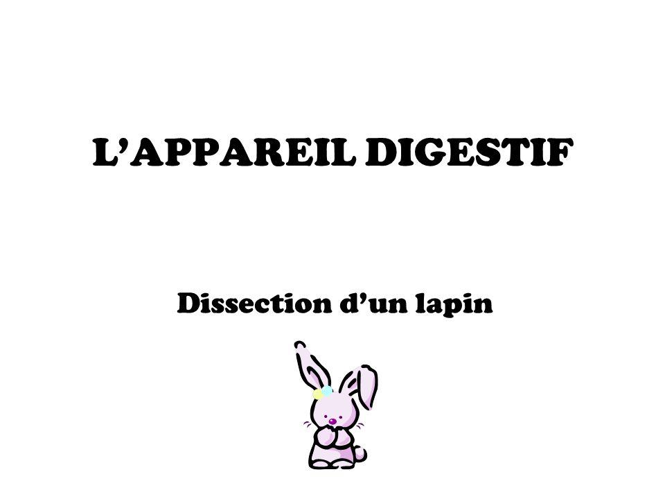 L'APPAREIL DIGESTIF Dissection d'un lapin