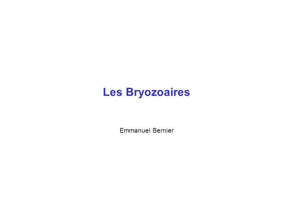 Les Bryozoaires Emmanuel Bernier