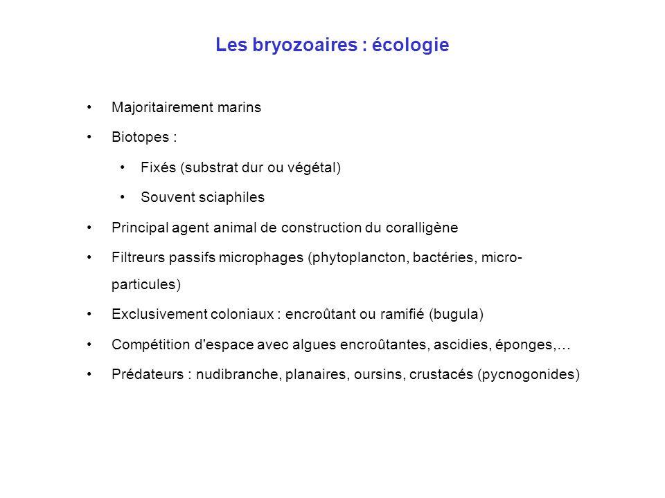 Les bryozoaires : écologie