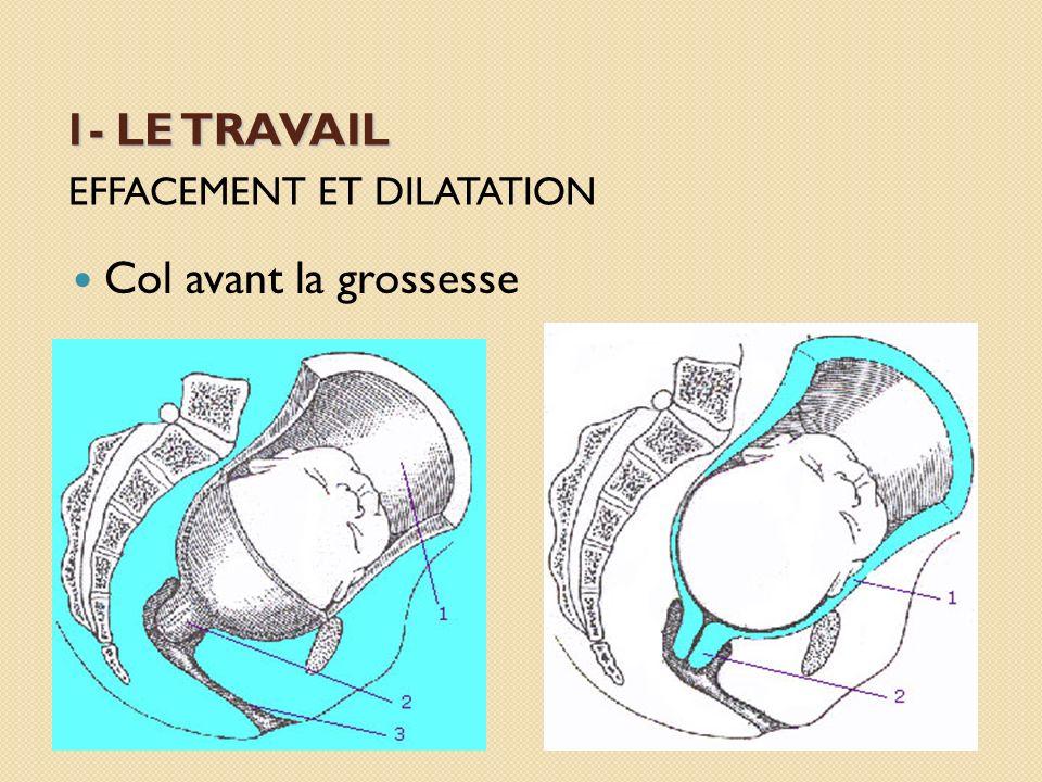 1- LE TRAVAIL EFFACEMENT ET DILATATION Col avant la grossesse