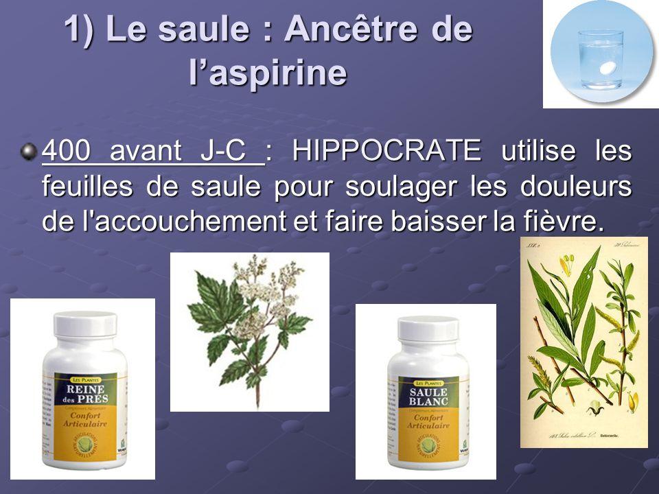 1) Le saule : Ancêtre de l'aspirine