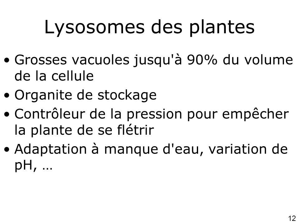 Lundi 15 octobre 2007 Lysosomes des plantes. Grosses vacuoles jusqu à 90% du volume de la cellule.