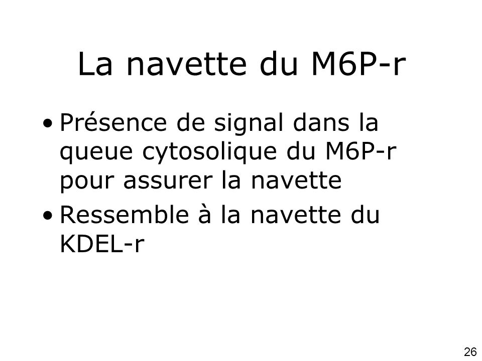 Lundi 15 octobre 2007 La navette du M6P-r. Présence de signal dans la queue cytosolique du M6P-r pour assurer la navette.