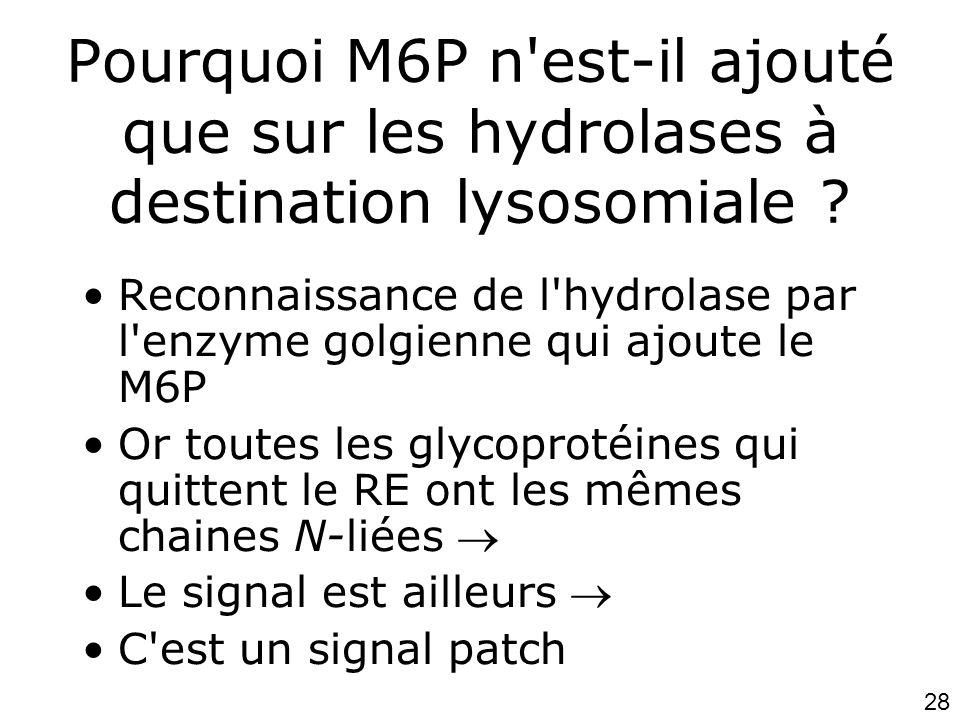Lundi 15 octobre 2007 Pourquoi M6P n est-il ajouté que sur les hydrolases à destination lysosomiale
