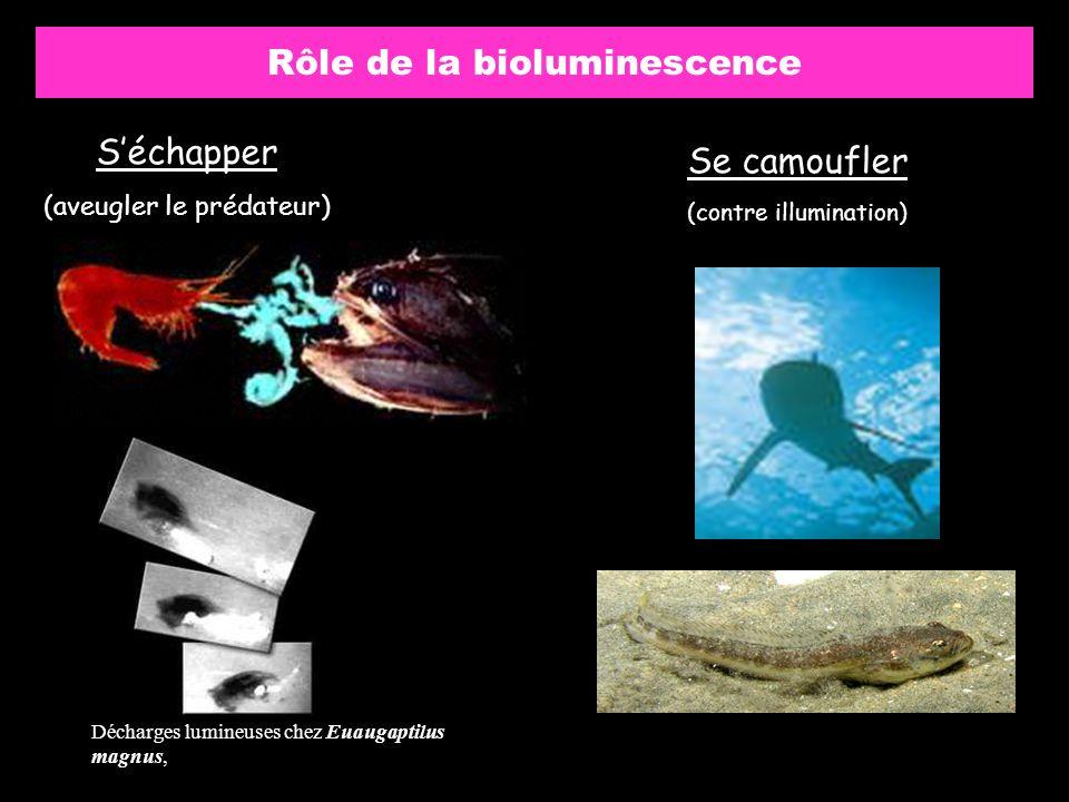 Rôle de la bioluminescence