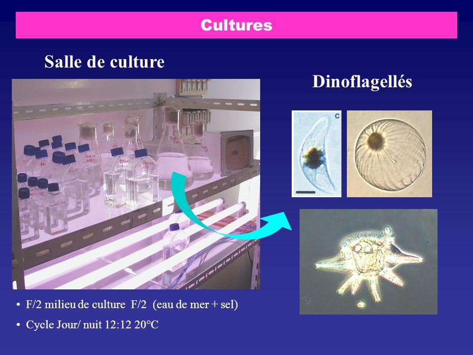 Salle de culture Dinoflagellés Cultures