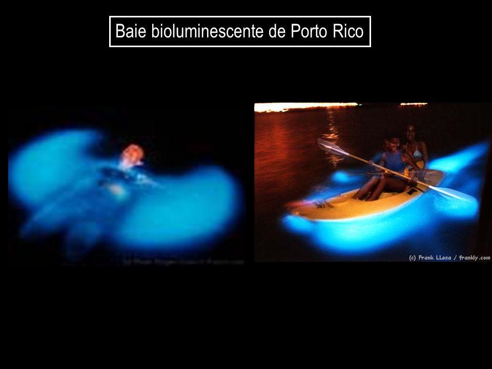 Baie bioluminescente de Porto Rico